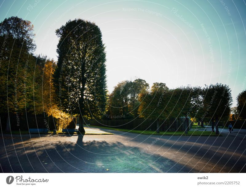 garden art Work of art Culture Landscape Plant Cloudless sky Autumn Beautiful weather Tree Grass Hedge Park bench Hannover Herrenhäuser Gardens Lanes & trails