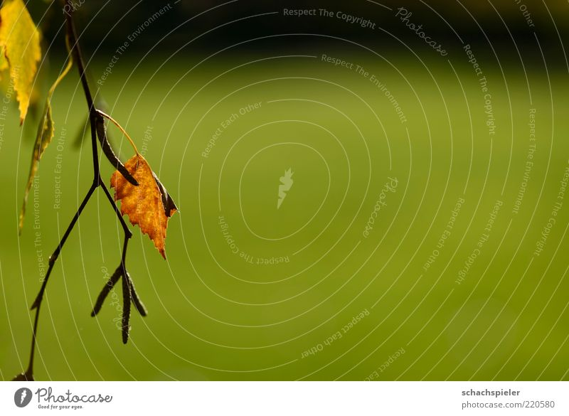 alone ... Nature Plant Autumn Leaf Brown Green Loneliness Sadness Colour photo Exterior shot Close-up Copy Space right Copy Space top Copy Space bottom