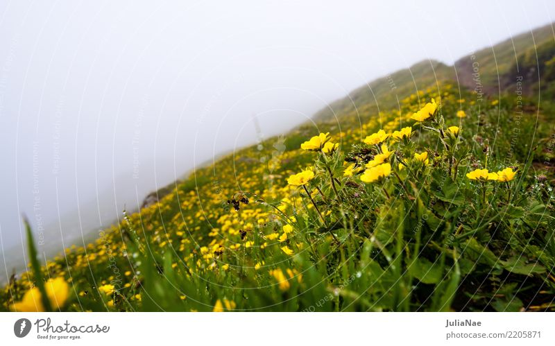 Alpine meadow in the fog Flower Alps Mountain Peak Fog Summer blossom Climate Water Drops of water Trickle buttercups Yellow Meadow