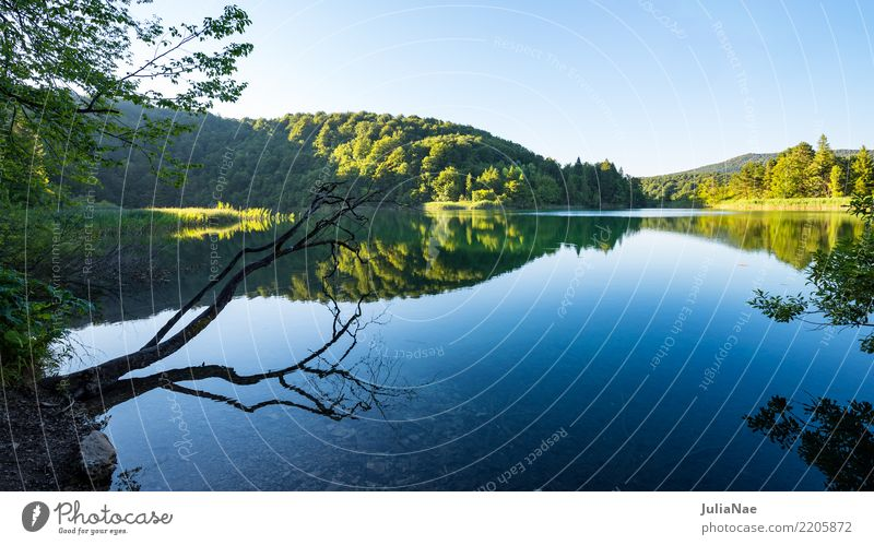 mirror-smooth lake with branches and trees Relaxation Calm Nature Water Tree Forest Lake Natural Attentive Croatia Smoothness Branch Tree trunk