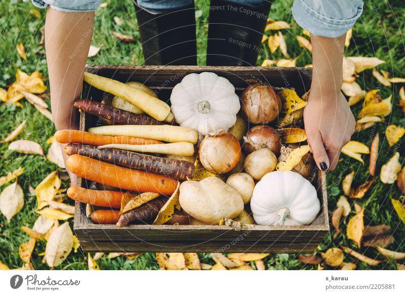 autumn vegetables Food Vegetable Nutrition Organic produce Vegetarian diet Woman Adults Environment Autumn Fresh Healthy Yellow Orange Joie de vivre (Vitality)