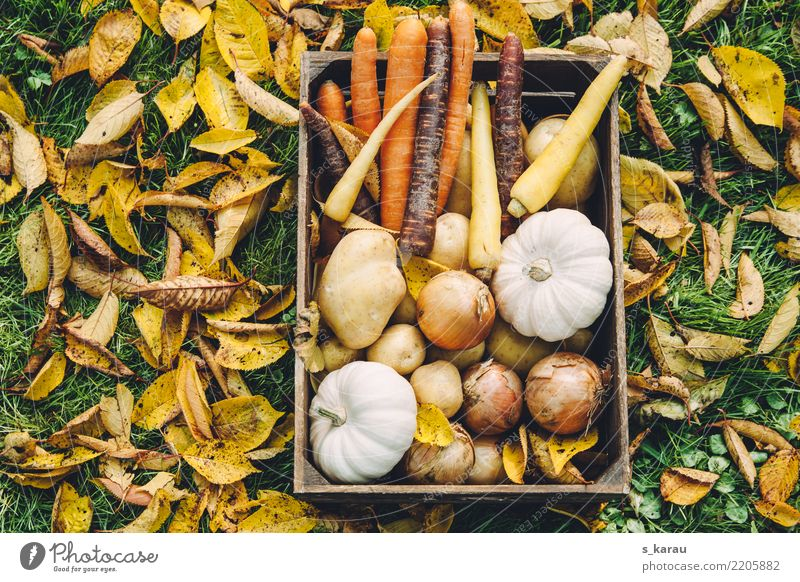 Nature Healthy Eating Leaf Autumn Garden Food Nutrition Fresh Agriculture Seasons Harvest Organic produce Sustainability Vegetarian diet Forestry