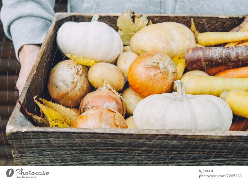 autumn Vegetable Organic produce Vegetarian diet Human being Masculine 1 Fresh Healthy Multicoloured Vegan diet Pumpkin Carrot Seasons Autumn concept Harvest