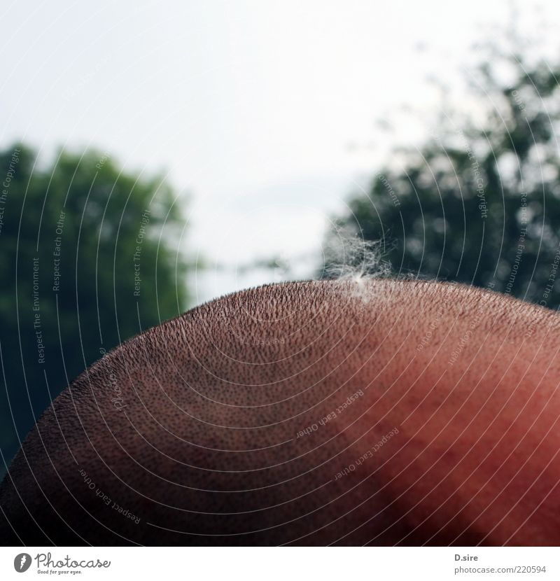 Human being Man Adults Hair and hairstyles Head Masculine Skin Uniqueness Bald or shaved head Seed Anonymous Section of image Pollen Partially visible
