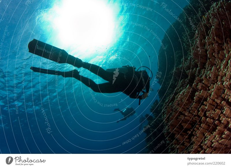 autumn diving Vacation & Travel Adventure Summer Summer vacation Sun Ocean Aquatics Dive Human being Water Waves Coral reef Relaxation To enjoy Sports Athletic