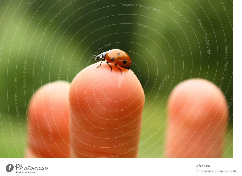 Nature Environment Happy Skin Fingers Touch Contact Discover Beetle Ladybird Love of animals Love of nature Good luck charm Wary Fingertip Bright background