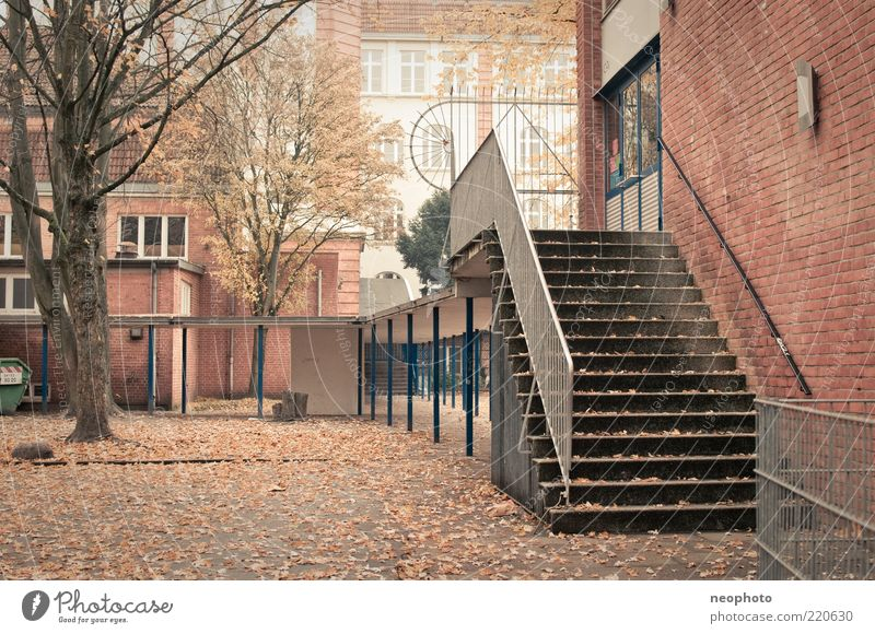 Tree Leaf Autumn School School building Stairs Asphalt Brick Banister Places Autumn leaves Schoolyard Leafless Autumnal colours Brick facade