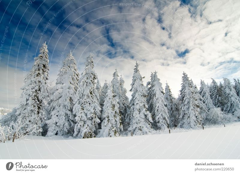 ...so I'm looking forward to it !! Winter Snow Environment Nature Landscape Climate Beautiful weather Ice Frost Tree Forest Blue White Fir tree Sky Black Forest