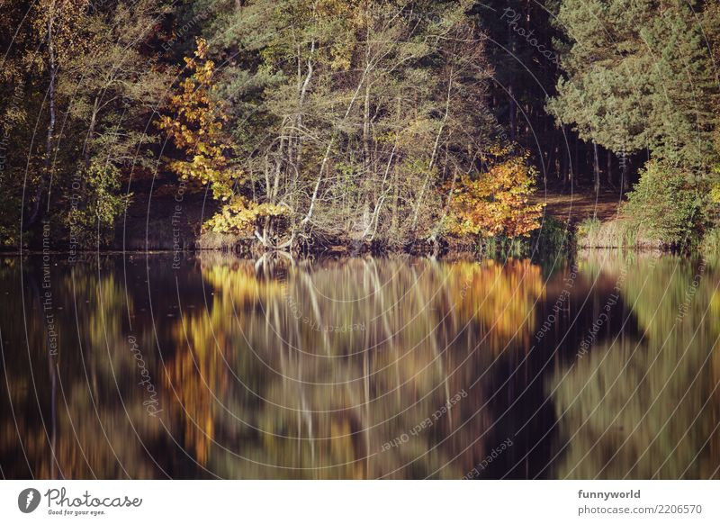 The reflection Beautiful weather Plant Tree Foliage plant Park Lakeside Esthetic Symmetry Reflection Forest Yellow Autumn Idyll Perspective Central perspective
