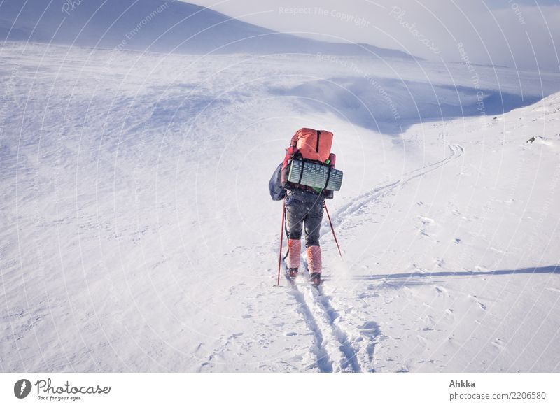 Skier in snowy landscape with hiking backpack Adventure Winter sports Young woman Youth (Young adults) 1 Human being Landscape Snow Mountain Norway Authentic
