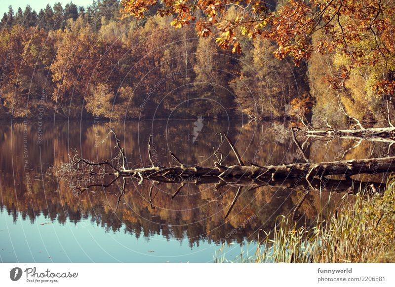 Funny insects in the water Environment Nature Landscape Plant Water Autumn Weather Beautiful weather Tree Wild plant Lakeside Natural Surrealism Symmetry Death
