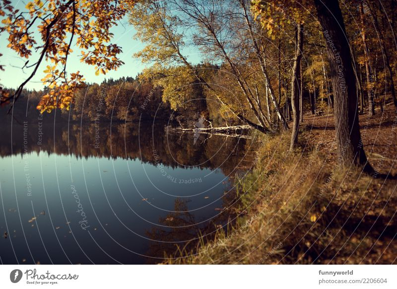 on the bank Vacation & Travel Trip Environment Nature Landscape Plant Earth Water Sky Cloudless sky Sunlight Autumn Tree Lakeside Contentment Loneliness