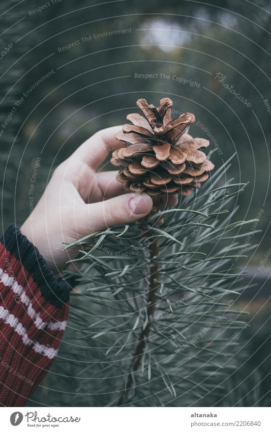 Fir cone in the hand of teenager. Lifestyle Design Winter Decoration Feasts & Celebrations Christmas & Advent New Year's Eve Human being Woman Adults Hand