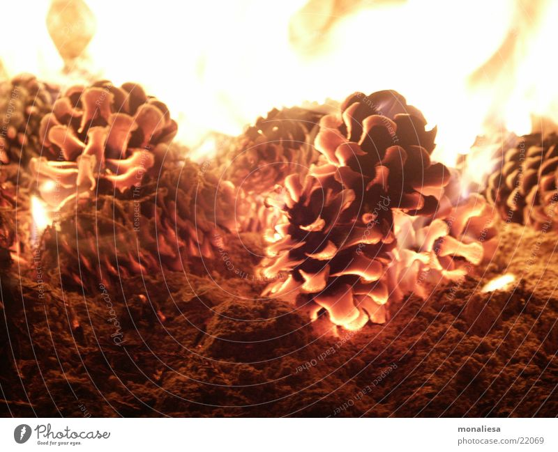 Warmth Blaze Physics Odor Flame Barbecue (apparatus) Ashes Embers Fir cone