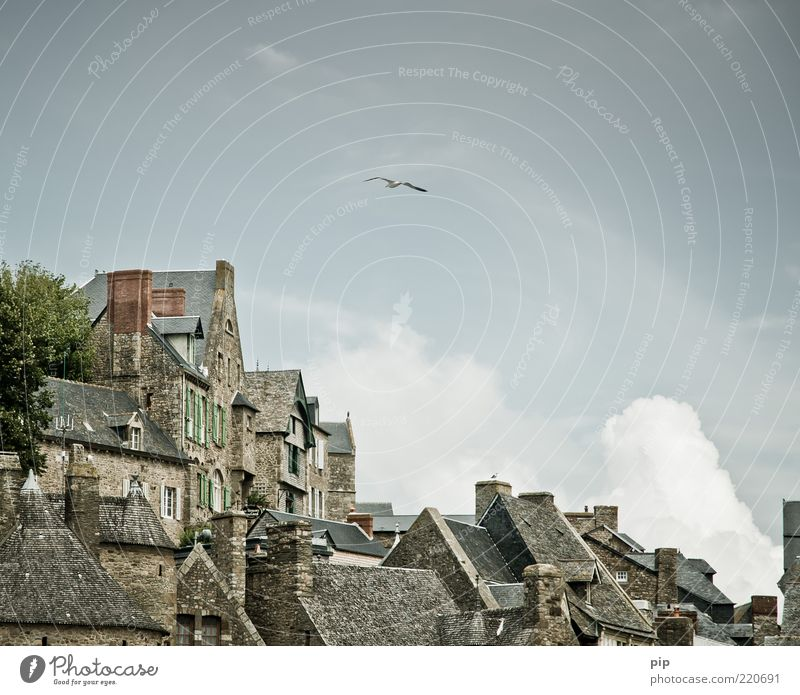 BirdPerspective Sky Clouds Tree Town Old town House (Residential Structure) Facade Window Roof Chimney Tourist Attraction Mont St Michel Seagull 1 Animal Tall