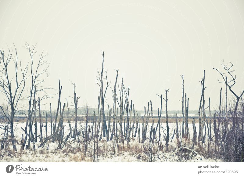 Nature White Tree Plant Winter Calm Far-off places Cold Snow Death Sadness Landscape Ice Bright Weather Environment
