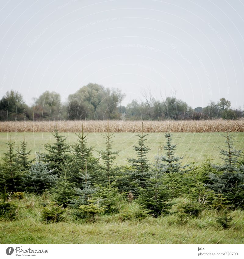 tree nursery Environment Nature Landscape Sky Plant Tree Grass Foliage plant Field Blue Green Fir tree Colour photo Exterior shot Deserted Copy Space top Day