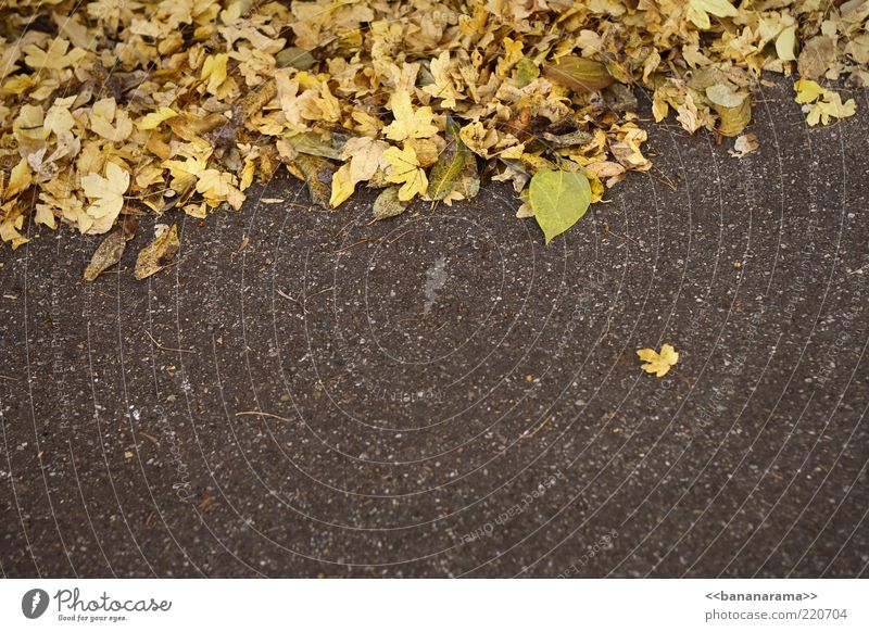loner Nature Autumn Weather Leaf Ground Asphalt runaway Autumnal Autumnal colours Yellow separate Colour photo Multicoloured Exterior shot Copy Space bottom Day