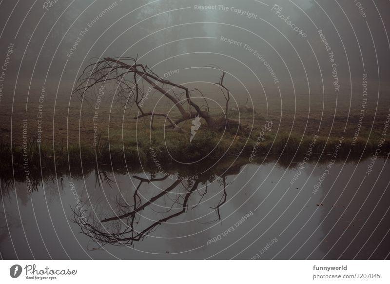 Water Tree Loneliness Dark Environment Autumn Brown Fog Esthetic Gloomy Branch Lakeside River bank Creepy Bleak Mystic
