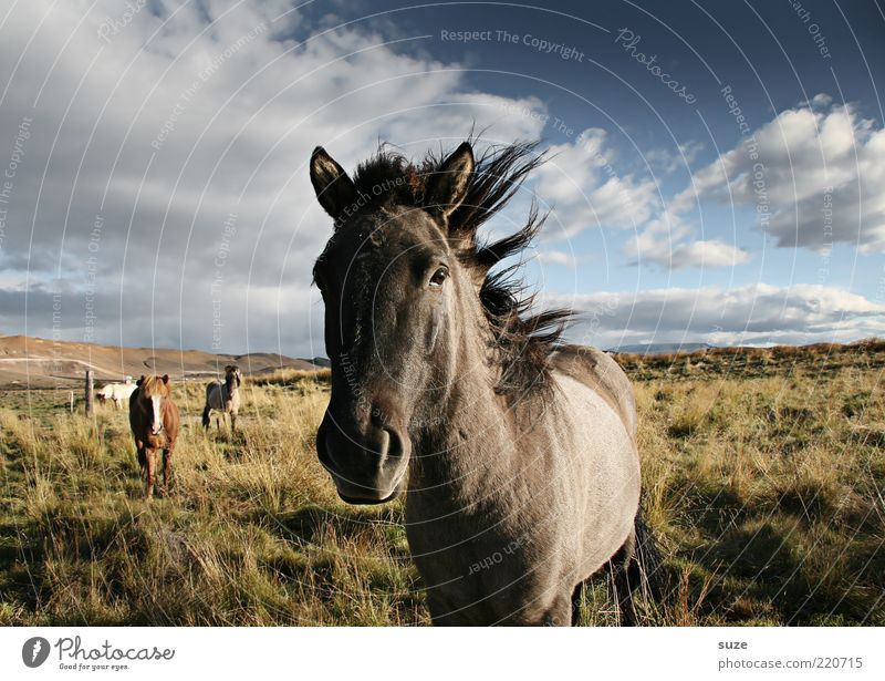 Nature Beautiful Sky Clouds Animal Meadow Freedom Landscape Moody Wait Wind Horse Esthetic Group of animals Stand Wild