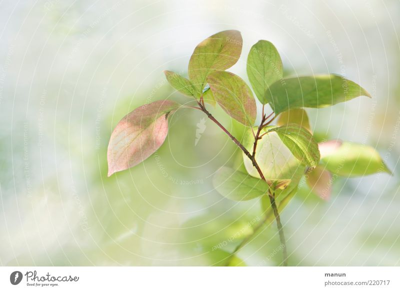 Nature Beautiful Summer Leaf Autumn Esthetic Bushes Delicate Exceptional Smooth Twig Rachis Leaf green Wild plant Autumnal colours Bright green