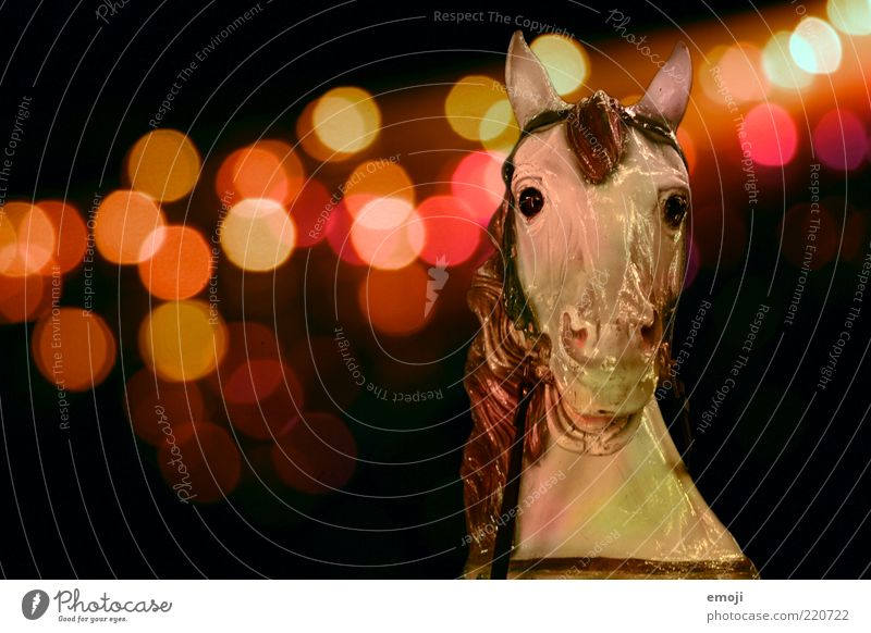 Animal Dark Horse Kitsch Infancy Fairs & Carnivals Sculpture Figure Visual spectacle Desire Memory Section of image Childhood memory Point of light Looking