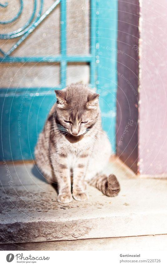 sunbathe Door Animal Cat Animal face Pelt Paw 1 Beautiful Serene Calm Doorstep Tails Sit Domestic cat Individual Fatigue Street cat Prowl Colour photo