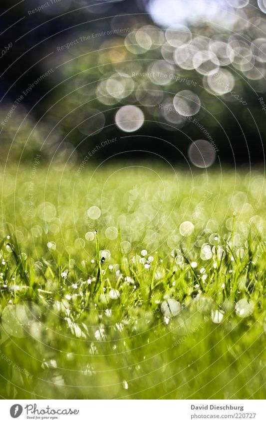 Nature Water Green Plant Summer Meadow Autumn Grass Spring Park Rain Landscape Air Background picture Weather Wet