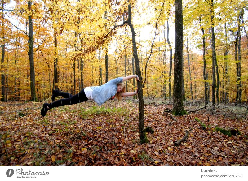 Woman Human being Nature Youth (Young adults) Tree Blue Plant Forest Autumn Adults Exceptional Tree trunk Hover Horizontal Autumn leaves