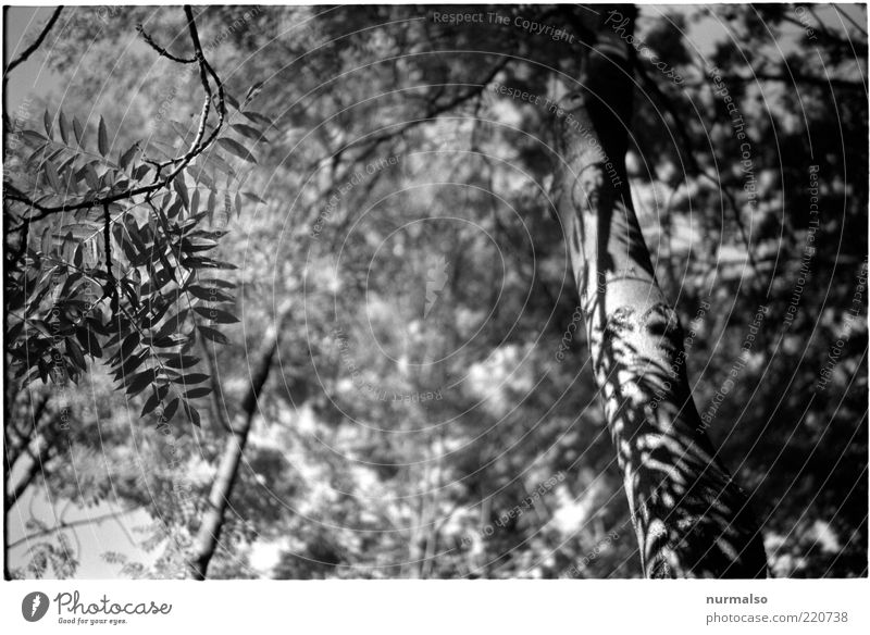 grey-tone jungle Environment Nature Plant Summer Tree Virgin forest Natural Gray Tree trunk Leaf Shadow Black & white photo Leaf shade Leaf canopy
