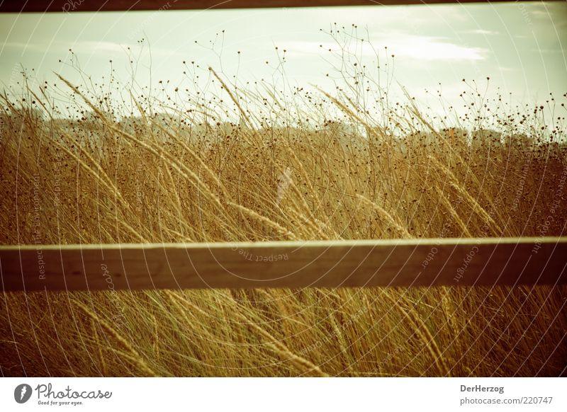 Nature Sky Sun Summer Beach Calm Emotions Grass Dream Warmth Landscape Coast Environment Gold Beautiful weather Portugal