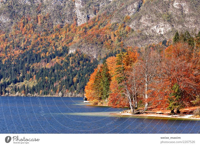 Colorful autumn lake behind forest and mountains Vacation & Travel Tourism Trip Adventure Far-off places Environment Nature Landscape Autumn Beautiful weather