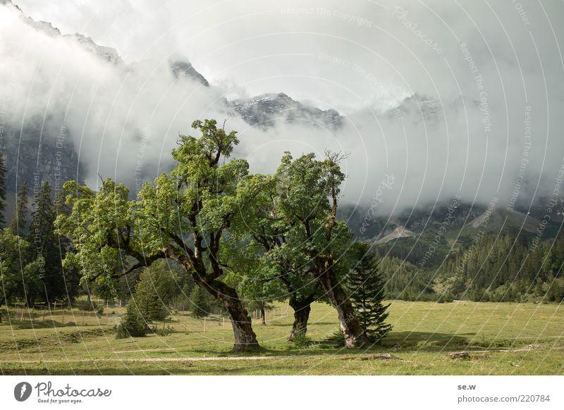 dream tree Elements Clouds Sunlight Summer Autumn Tree Alpine pasture Maple tree Meadow Alps Mountain Peak Large Gray Green Romance Calm Fairytale landscape