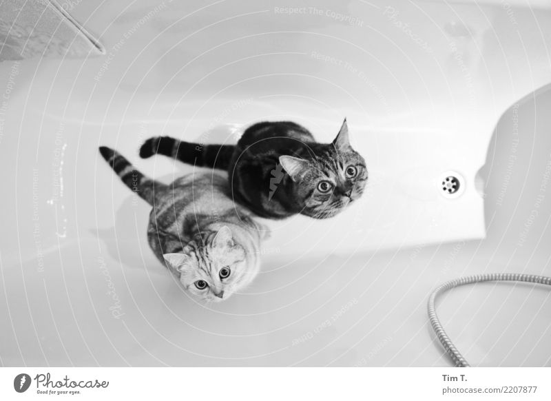 Cat Animal Contentment Bathtub Safety Bathroom Pet Domestic cat