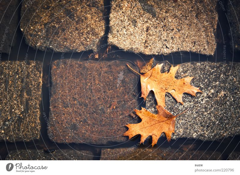 case Water Autumn Leaf Street Authentic Dirty Wet Natural Beautiful Brown Autumn leaves Puddle Surface of water Oak leaf Early fall Cobblestones Ground In pairs