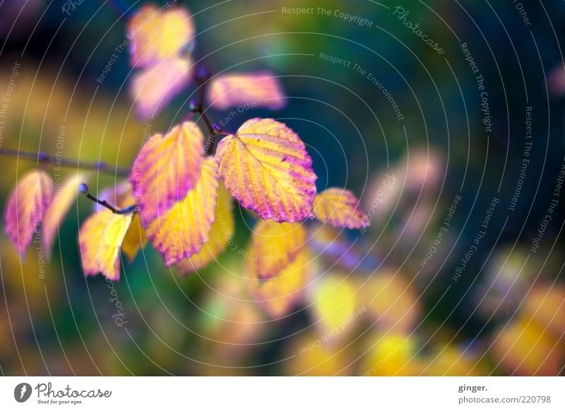 Nature Old Plant Colour Leaf Environment Dark Autumn Bright Weather Climate Authentic Esthetic Beautiful weather Seasons Twig