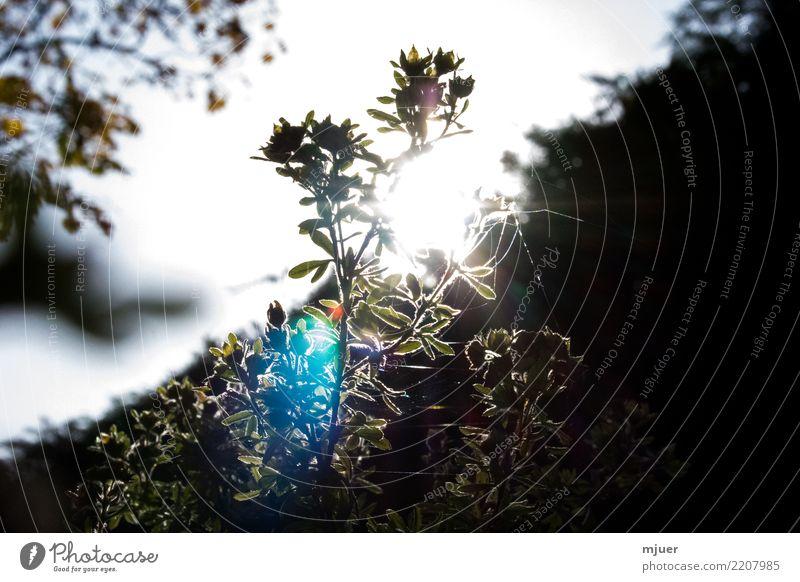 Sky Nature Plant Blue Summer Beautiful White Sun Flower Leaf Calm Winter Black Blossom Autumn Spring
