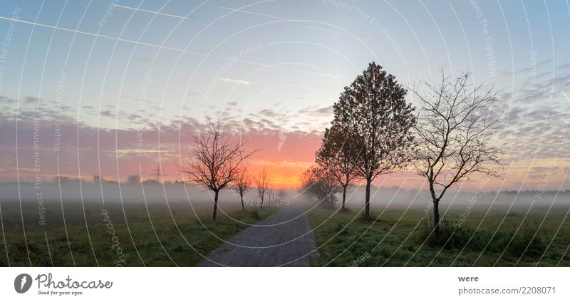 Sunrise over a dirt road Calm Agriculture Forestry Nature Landscape Plant Tree Meadow Field Places Street Lanes & trails Peaceful Environmental protection