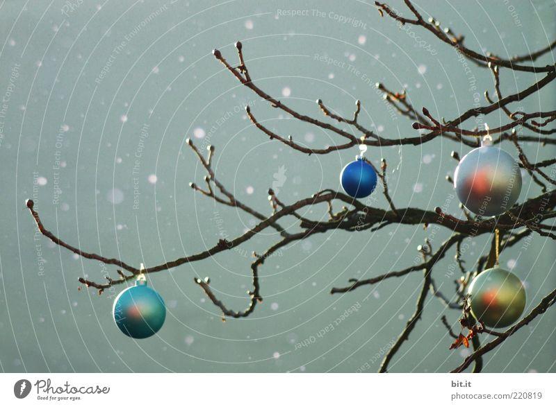 Christmas & Advent Tree Blue Winter Dark Snowfall Moody Glittering Weather Christmas tree Kitsch Decoration Sphere Silver Glitter Ball
