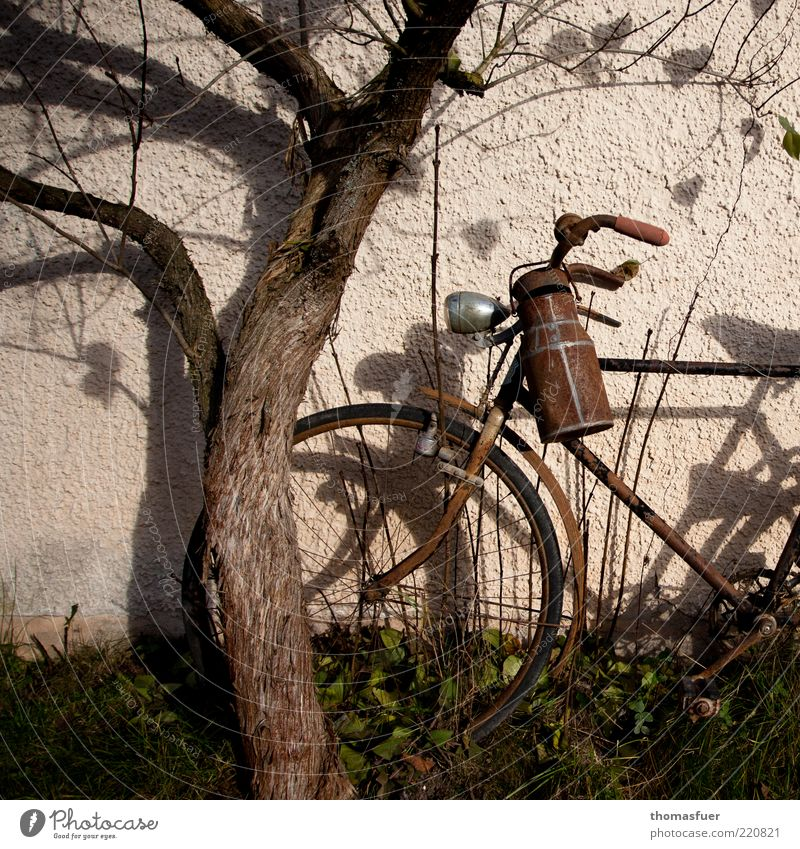 Old Tree Autumn Wall (building) Wall (barrier) Moody Brown Bicycle Metal Retro Transience Decline Rust Shabby Beautiful weather Partially visible