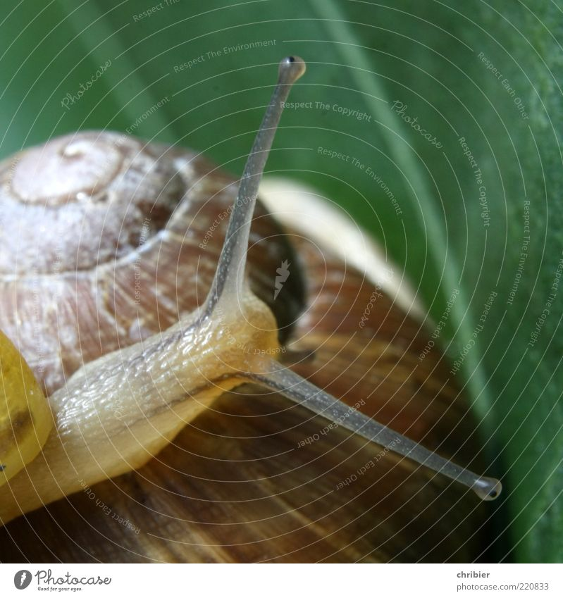 Leaf Animal Glittering Small Large Safety Protection Trust Touch Discover Snail Spiral Feeler Crawl Rachis Slimy