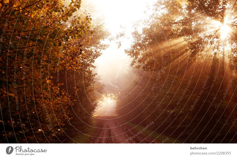 In the end there is light Nature Plant Sun Autumn Beautiful weather Tree Bushes Leaf Field Forest To enjoy Dream Power Brave Hope Belief Grief Longing Light