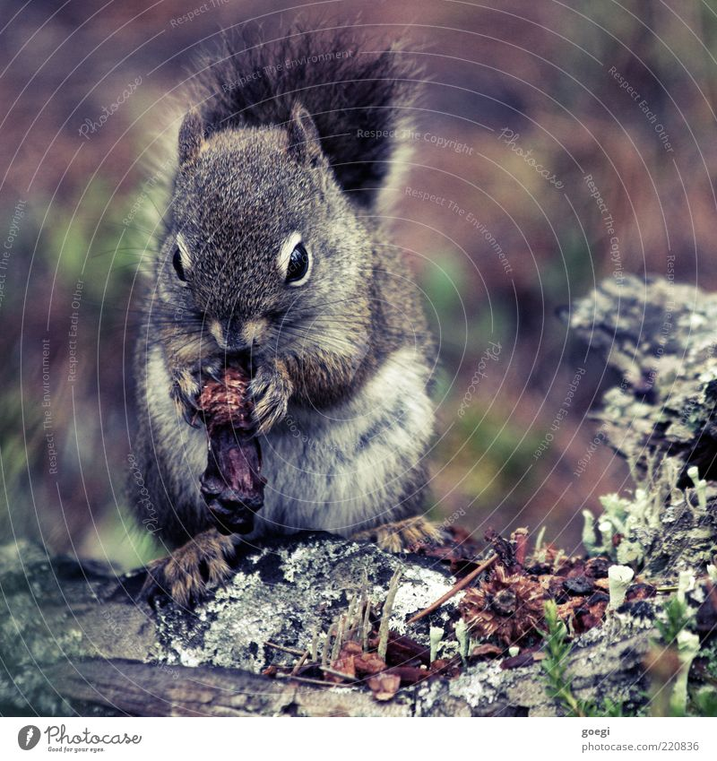 Nature Plant Eyes Animal Wood Sit Wild Soft Wild animal Pelt Tree trunk Paw To feed Copy Space Squirrel Rodent