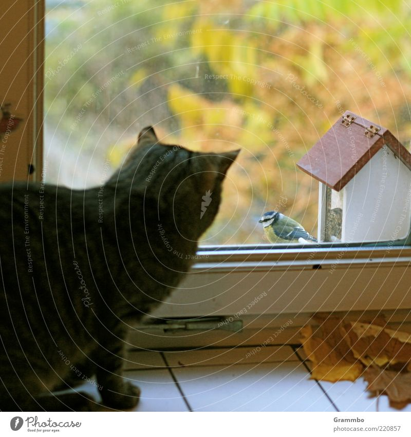 Animal Far-off places Window Cat Bird Sit Safety Threat Observe Curiosity Pet Brash Autumn leaves Recklessness Window frame Tit mouse