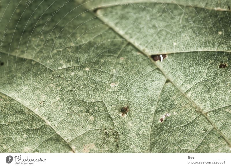 Nature Old Plant Leaf Autumn Environment Rachis Autumn leaves Foliage plant Macro (Extreme close-up) Leaf green Underside of a leaf