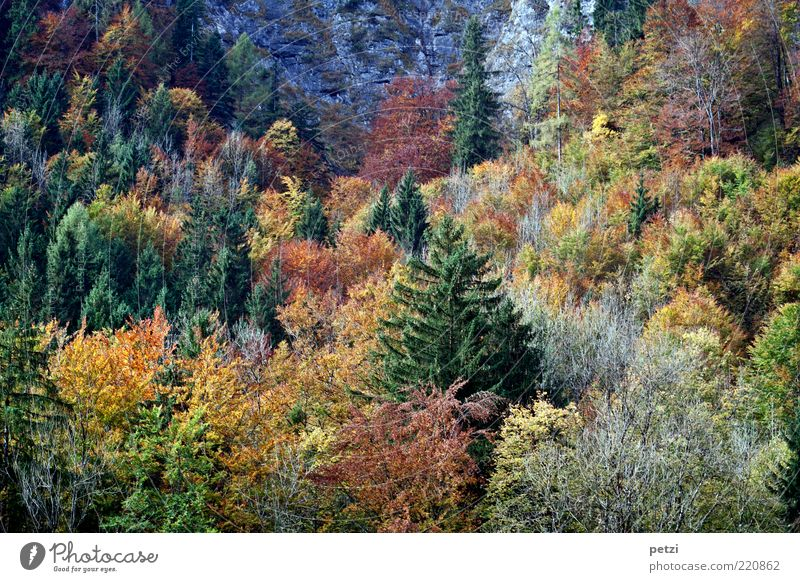 autumn forest Environment Nature Landscape Autumn Tree Bushes Agricultural crop Forest Esthetic Authentic Beautiful Brown Multicoloured Yellow Green Calm