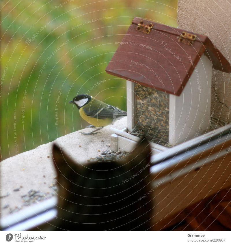 Say hello to Minka for me! Animal Pet Wild animal Cat Bird 2 Sadness Birdhouse Tit mouse Observe Window Window pane Colour photo Safety Threat Feed Sit