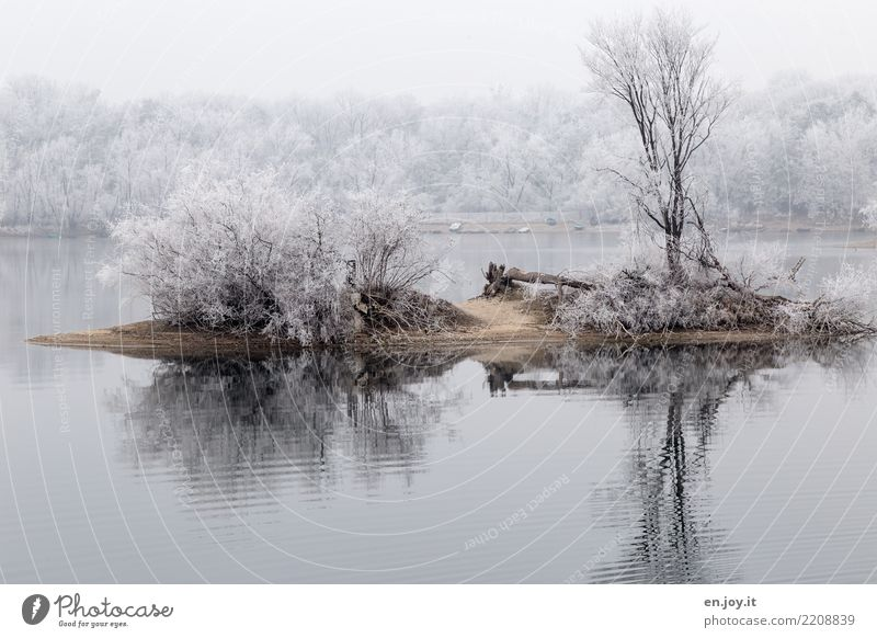 island bliss Environment Nature Landscape Plant Winter Climate Climate change Snow Tree Bushes Lakeside Island Cold White Calm Loneliness Stagnating Surrealism