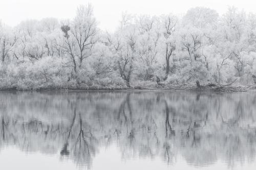 Nature White Landscape Loneliness Calm Winter Forest Black Environment Cold Sadness Snow Lake Climate Lakeside Grief