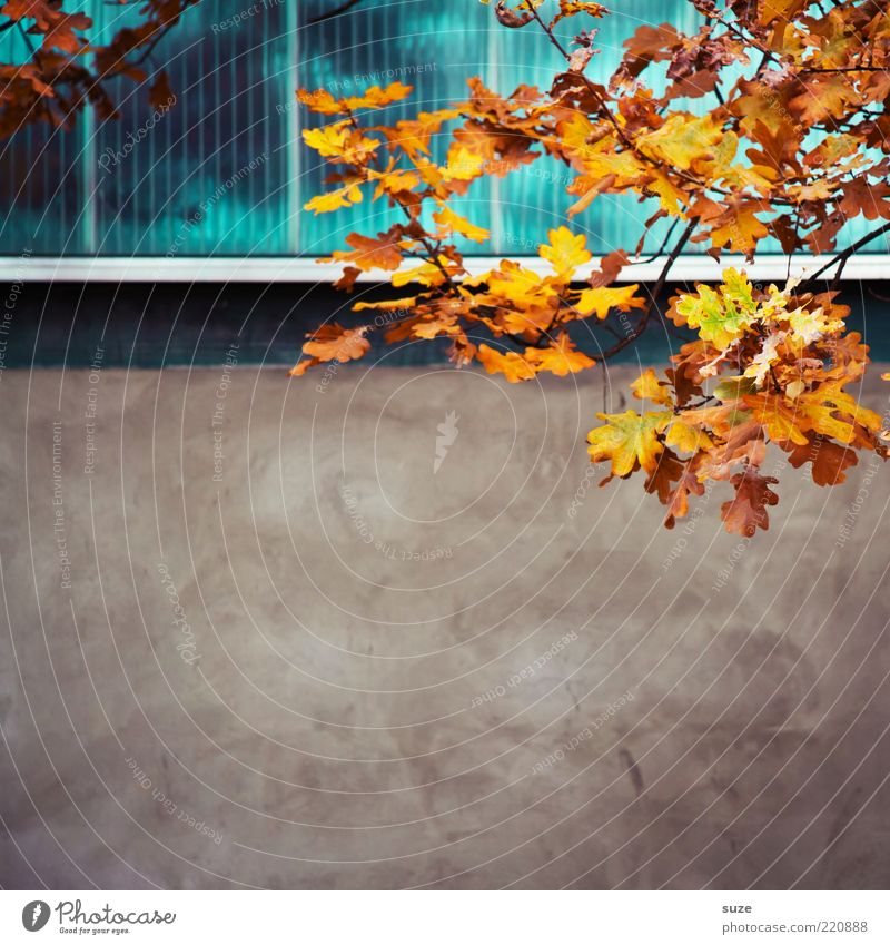 a tendency to free space Beautiful Nature Plant Sky Autumn Leaf Wall (barrier) Wall (building) Facade Window Esthetic Autumn leaves Autumnal Seasons Early fall